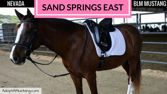 Sand Springs East HMA Mare