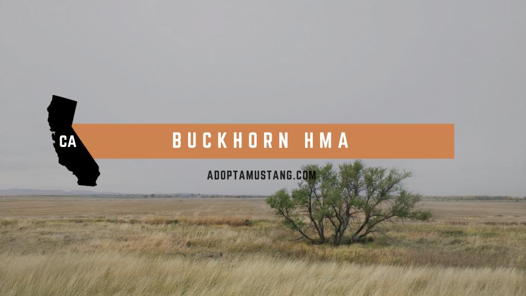 Buckhorn CA HMA