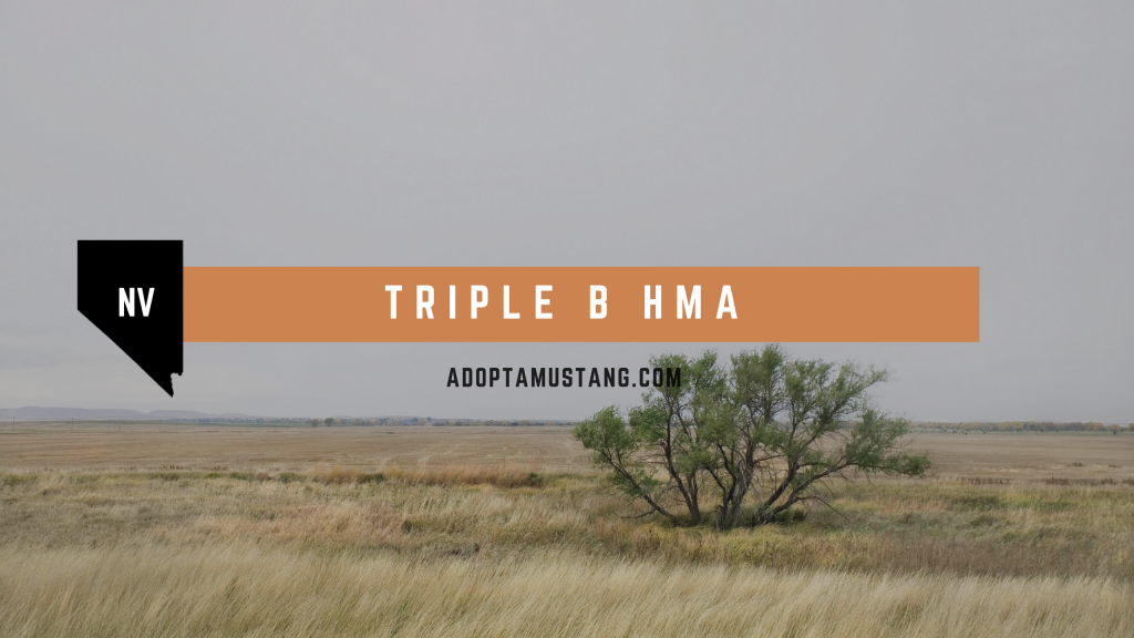 Triple B NV HMA