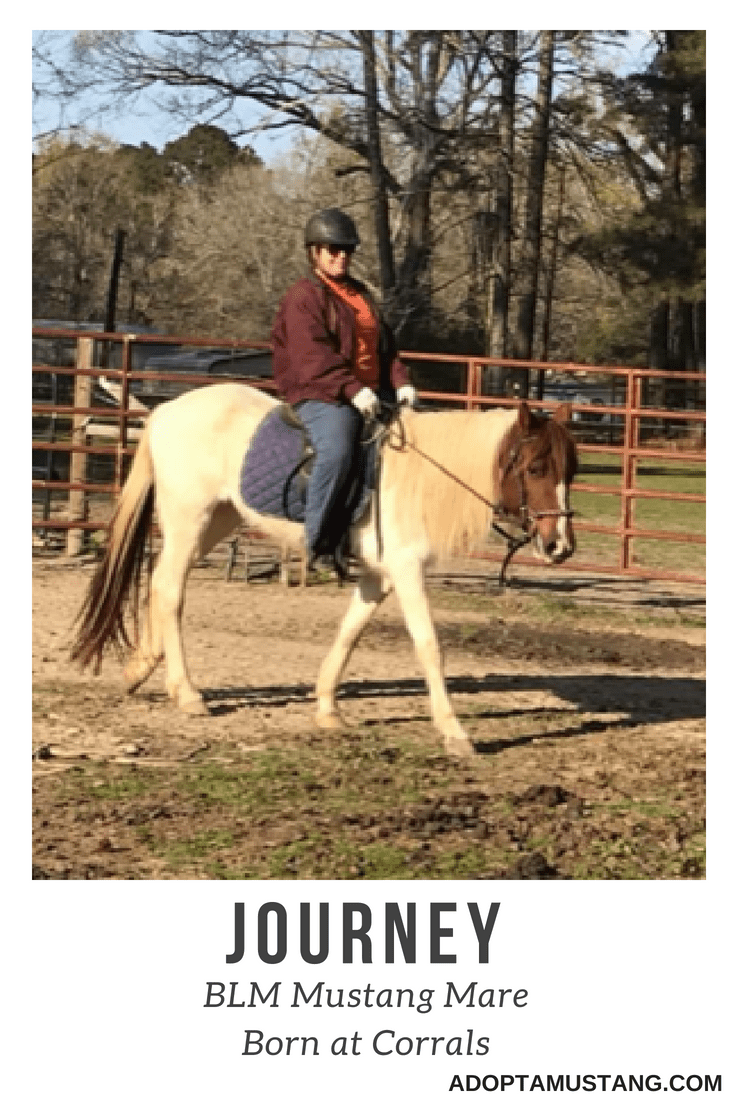 Journey – BLM Mustang Mare
