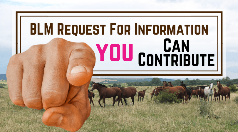 BLM Wild Horse & Burro Program – Request for Information
