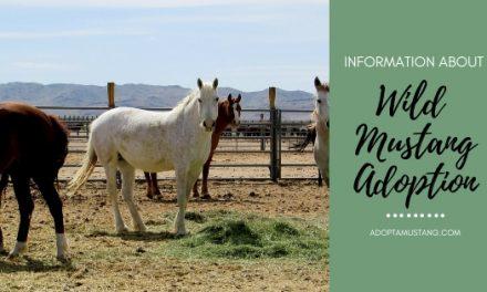 BLM Wild Mustang Adoption
