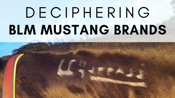 Decoding A Mustang Horse Brand