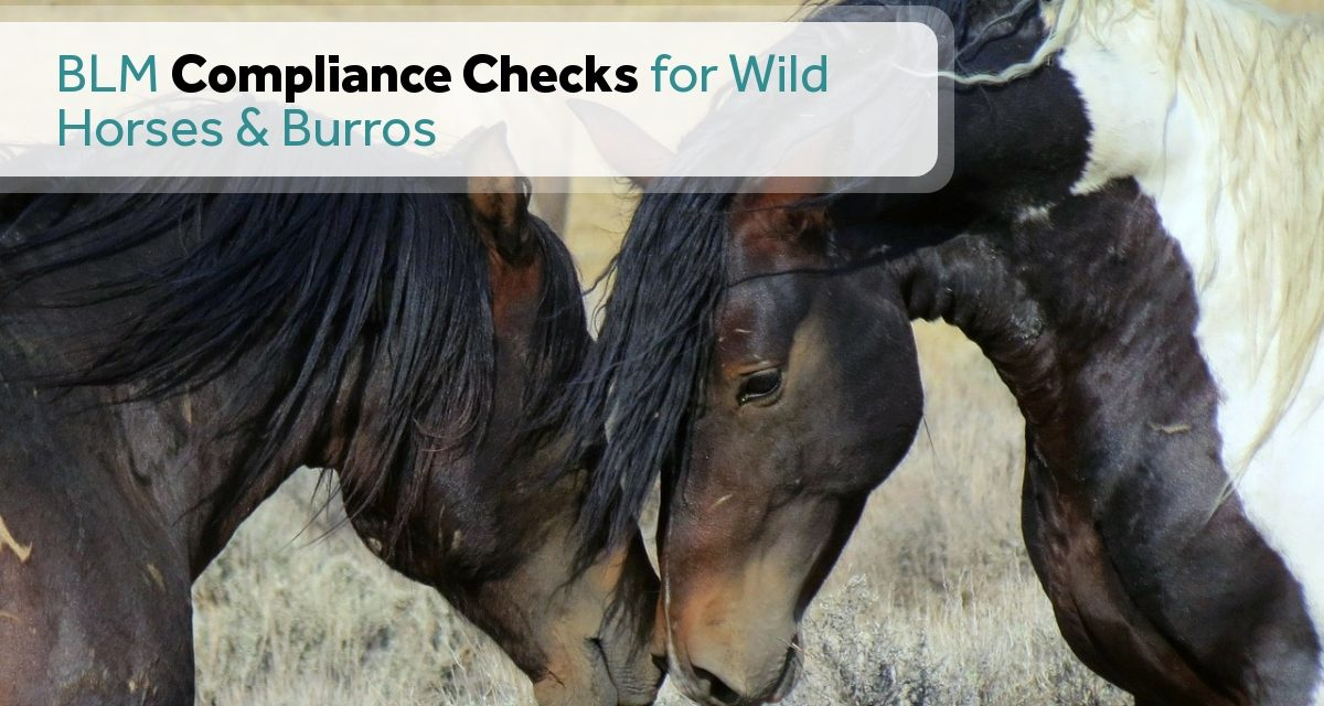 BLM Compliance Checks for Wild Horses and Burros