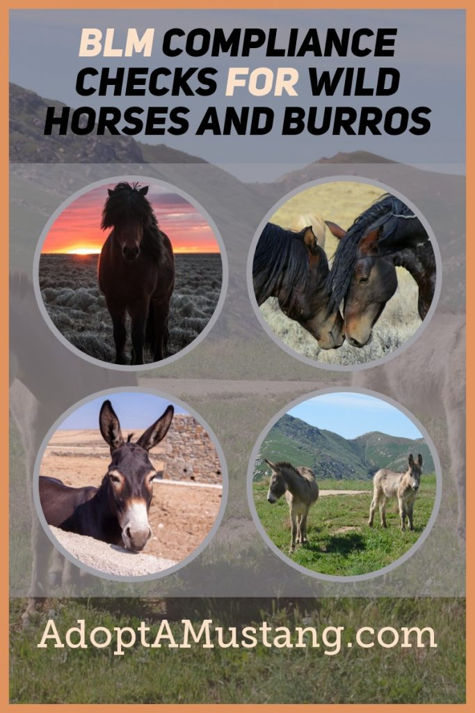 wild horses and burros