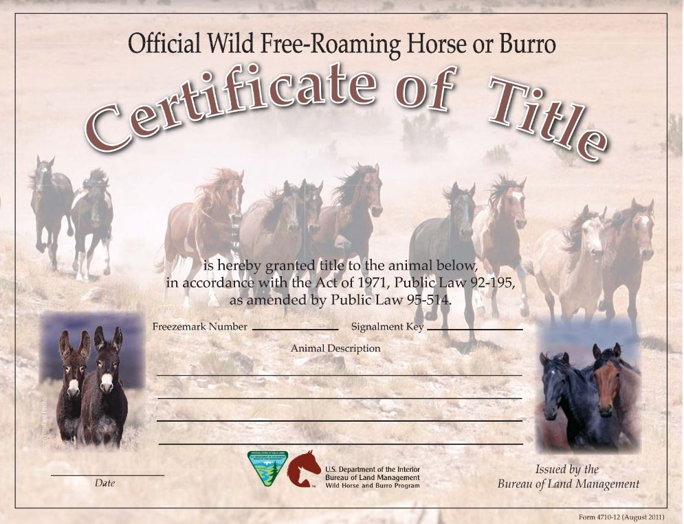 sample blm mustang title