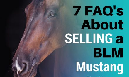 7 FAQs About Selling a BLM Mustang