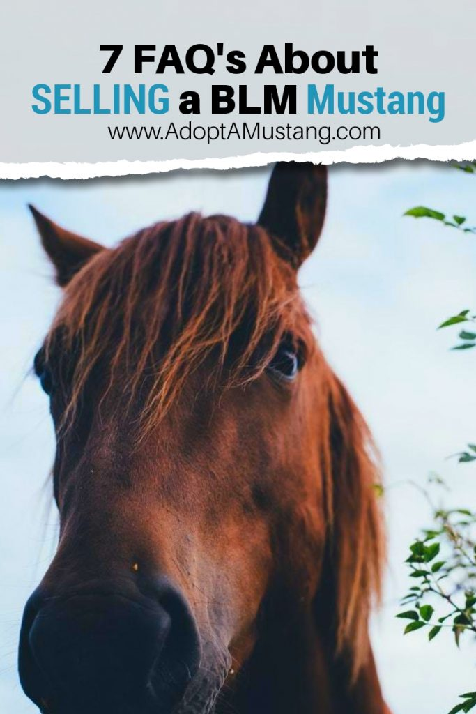 7 FAQ's about Selling a BLM Mustang